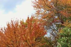 Scène de feuilles d'automne de feuillage d'automne Photos libres de droits