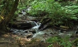 Scène de forêt Photographie stock libre de droits