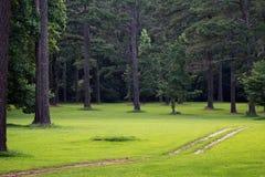 Scène de forêt Image libre de droits