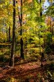 Scène de forêt avec des couleurs luxuriantes d'automne images libres de droits