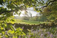 Scène de jacinthe des bois Photographie stock libre de droits