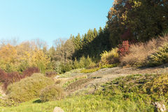 Scène de jardin d'automne Photo libre de droits