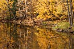 Scène de l'eau en bois d'automne Photographie stock