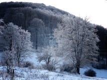 Scène de l'hiver Images stock