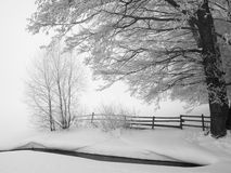 Scène de l'hiver Image libre de droits