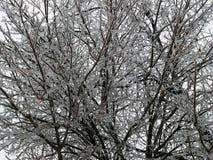 Scène de l'hiver Photographie stock libre de droits