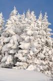 Scène de l'hiver avec de la glace et la neige image libre de droits