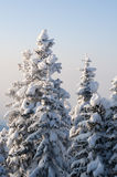 Scène de l'hiver avec de la glace et la neige images stock