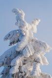 Scène de l'hiver avec de la glace et la neige photo libre de droits