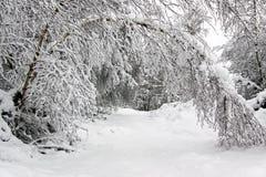 Scène de l'hiver des arbres forestiers et de la neige Photos stock