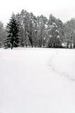 Scène de l'hiver des arbres forestiers et de la neige Photos libres de droits