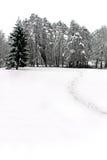Scène de l'hiver des arbres forestiers et de la neige Photographie stock libre de droits