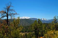 Scène de montagne couverte par neige images libres de droits