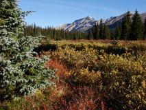 Scène de montagne d'automne Photos stock