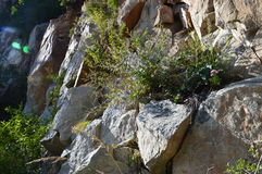 Scène de montagne de chinois traditionnel avec des roches Images stock
