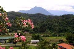 Scène de Mt Kinabalu Images libres de droits