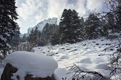Scène de neige Photographie stock libre de droits