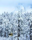 Scène de neige de forêt Photographie stock libre de droits