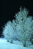 Scène de nuit de l'hiver photographie stock libre de droits