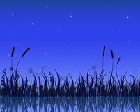 Scène de nuit de lac avec la silhouette d'herbe Photographie stock libre de droits