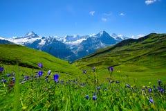 Scène de paysage d'abord à Grindelwald, Bernese Oberland, Swi Photos stock
