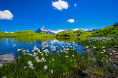 Scène de paysage d'abord à Grindelwald, Bernese Oberland, Swi Images stock