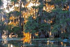 Scène de paysage de fin de l'après-midi dans le lac Martin Louisiana photographie stock libre de droits