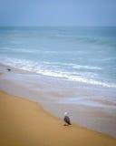 Scène de plage Image stock