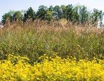 Scène de prairie Photographie stock libre de droits