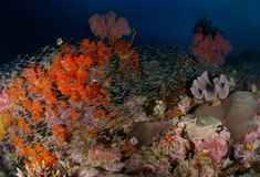 Scène de récif Image libre de droits