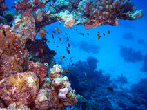 scène de récif Photo stock