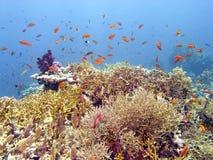Scène de récif avec le corail et les poissons Photographie stock