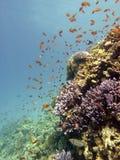 Scène de récif avec le corail et les poissons Photographie stock libre de droits