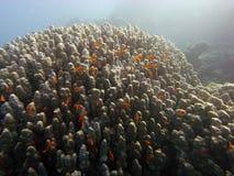 Scène de récif avec le corail et les poissons Photo stock