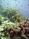 Scène de récif avec le corail et les poissons Image stock