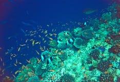 Scène de récif coralien Photographie stock