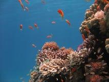 Scène de récif coralien Images stock