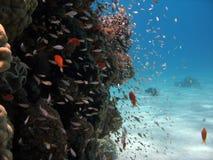 Scène de récif coralien Image libre de droits