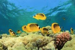 Scène de récif coralien Images libres de droits