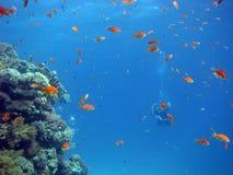 Scène de récif coralien avec des plongeurs Photos libres de droits