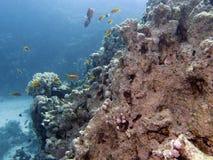 Scène de récif coralien avec des poissons Image libre de droits