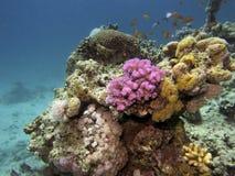 Scène de récif coralien avec des poissons Images libres de droits