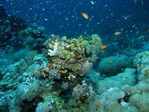 Scène de récif coralien avec des poissons Photographie stock libre de droits