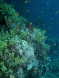 Scène de récif coralien avec des poissons Photographie stock
