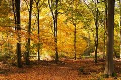 Scène de région boisée avec les feuilles d'automne jaunes et brunes image libre de droits