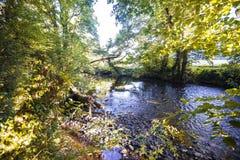 Scène de région boisée sur la rivière Avon chez Gara Bridge en Devon, Angleterre photo stock