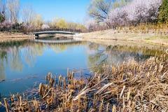 Scène de ressort de Pékin Forest Park olympique, Chine photographie stock libre de droits