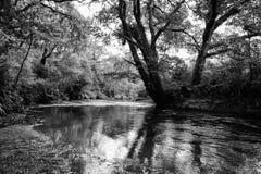 Scène de rivière Photos stock
