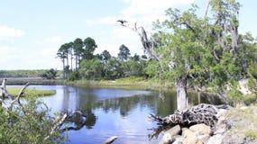 Scène de rivière Image libre de droits