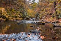 Scène de rivière dans la forêt entourée avec le feuillage d'automne Photo stock
